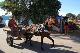 Einspänner auf Kuba